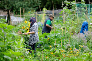 Streatham Common Community Garden