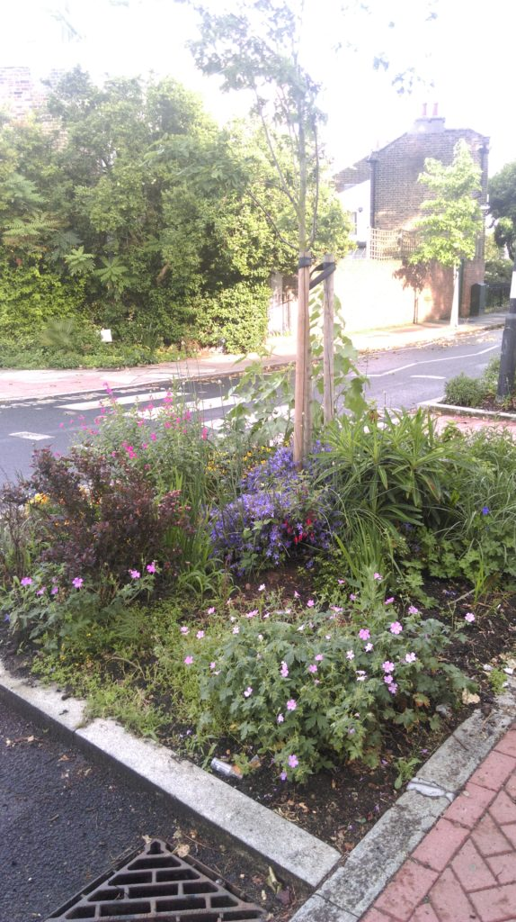 Claylands Green Gardening Group (CGGG) Pic