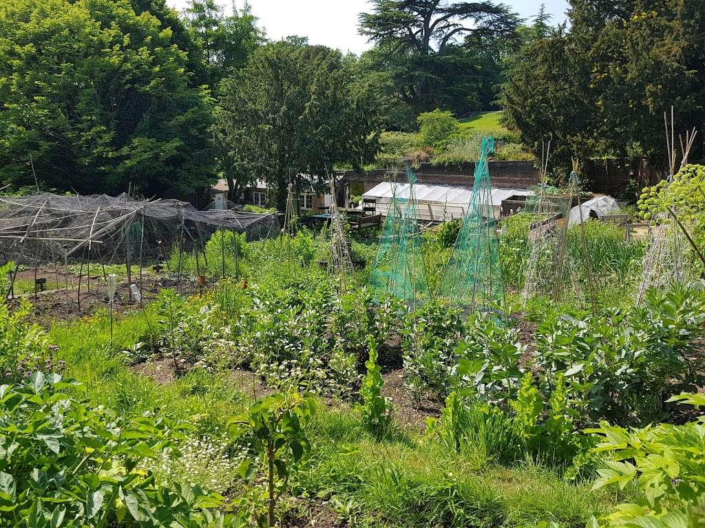 During lockdown, can I still go to my community garden or allotment?