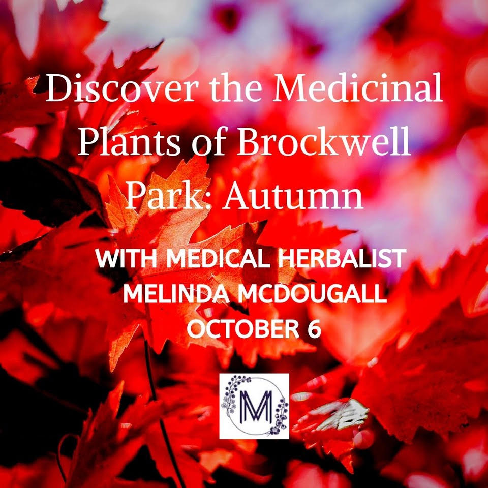 Discover the Medicinal Plants of Brockwell Park: Autumn