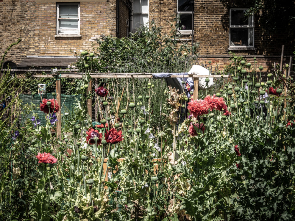Community gardens in Stockwell partner with the NHS