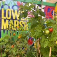 Colourful fruit, vegetable and herb gardens.