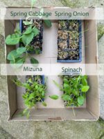 Winter Veg Seedlings 2020